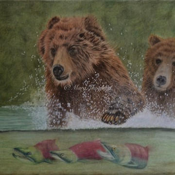 Grizzly Bears and Salmon