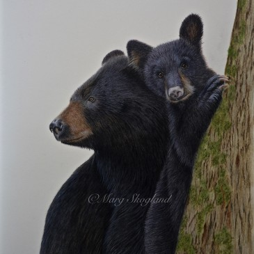 Black Bear, Mother and Cub
