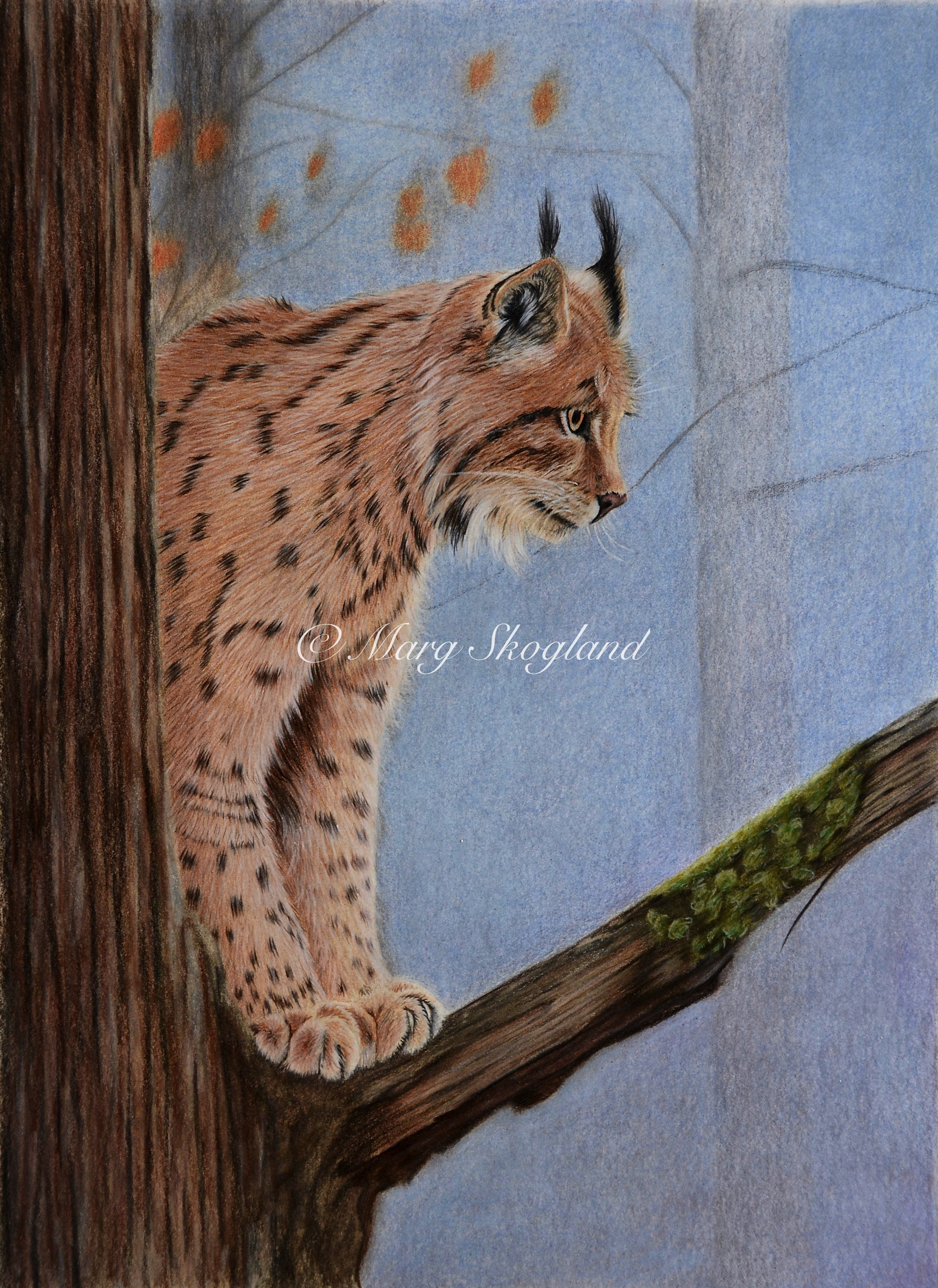 Lynx in a tree