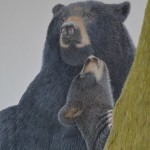 Black Bears - Mother and Cub 2