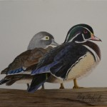 Male and female wood ducks.